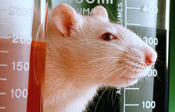 Over 3.2 Millions Experiments on Animals Performed Last Year